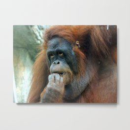 Orangutan Mom Metal Print