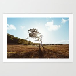 Standing in the Sun Art Print