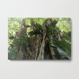 Wild Belize Jungle Metal Print