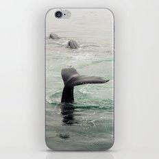 Whale Tail iPhone & iPod Skin