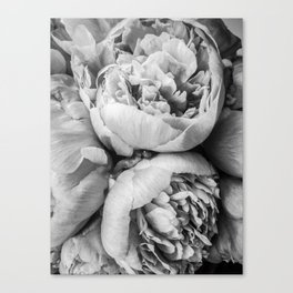 Plush Peony Flower in Black and White Canvas Print