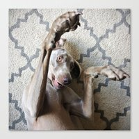 wrestling Canvas Prints featuring Weimaraner Wrestling by Cory Dean