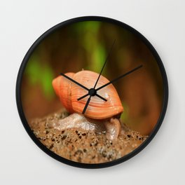 Slow and steady wins the race Wall Clock