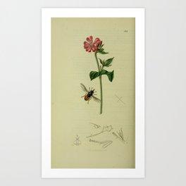 Flower Red Campion lychnis dioica diurna18 Art Print