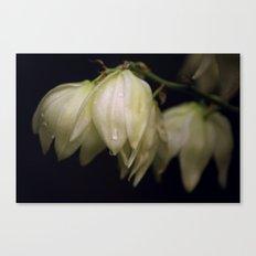 White Beauty  Canvas Print