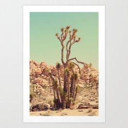Joshua Tree#2  Art Print