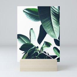 Ficus Elastica #26 #foliage #decor #art #society6 Mini Art Print