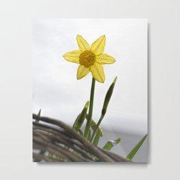 Daffodil VI Metal Print