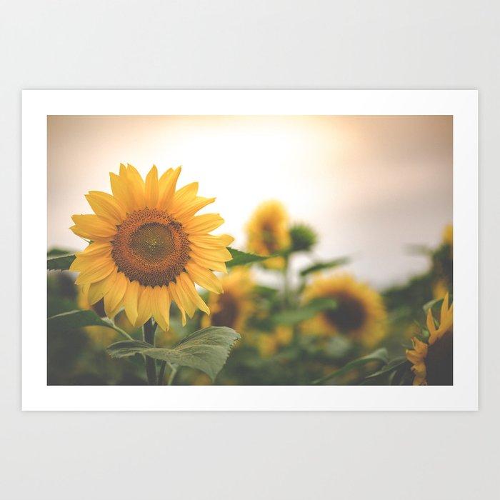 After the Rain - Sunflower Field II Kunstdrucke