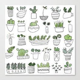 Spiky Succulents Canvas Print