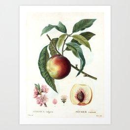 Peach on a branch Art Print