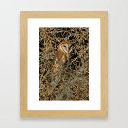 THE OLD BARN OWL Framed Art Print