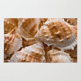 Seashells collection background Rug