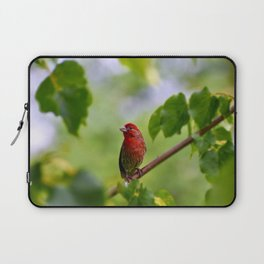 Red Finch Laptop Sleeve