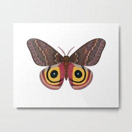 io moth (Automeris io) female specimen 2 Metal Print