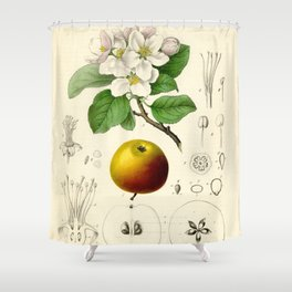 Antique Apple Study Shower Curtain