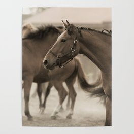 Horses in a stud Poster