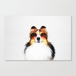 Retro Sheltie Canvas Print