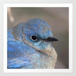 Watercolor Bird, Mountain Bluebird 01, Estes Park, Colorado, Colorado Beauty Art Print