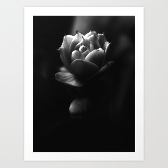 Black and White Kalanchoe  Bud Art Print