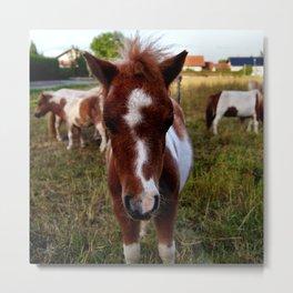 Ponys Metal Print