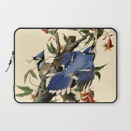 Blue Jay (Cyanocitta cristata) Laptop Sleeve
