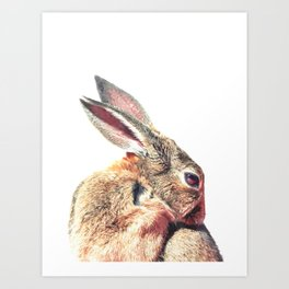Rabbit Portrait Art Print