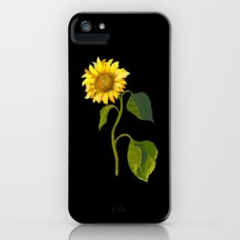 Helianthus Annuus Mary Delany Delicate Paper Flower Collage Black Background Floral Botanical iPhone Case