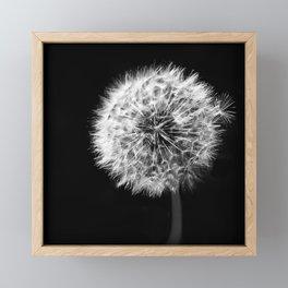 Black and White Dandelion Framed Mini Art Print