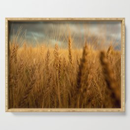 Harvest Time - Golden Wheat in Colorado Field Serving Tray