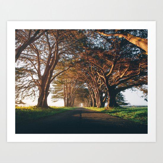 Sunrise at the Tree Tunnel - Point Reyes, California Art Print