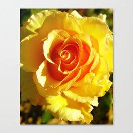 roses XVIII Canvas Print