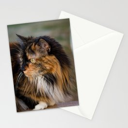 Calico on the Deck Stationery Cards