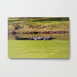 Alligator On Alert Metal Print