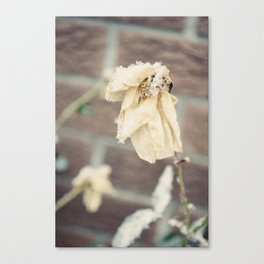 winter is coming and we are wilting. Canvas Print
