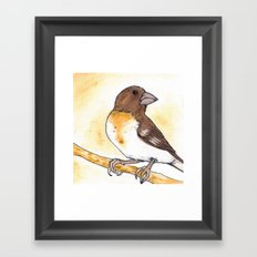 Yellow Rose-breasted Grosbeak Framed Art Print