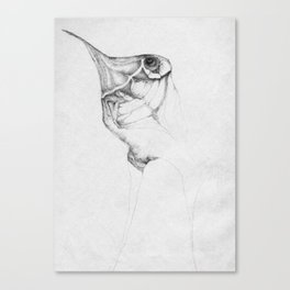 The wingless Canvas Print