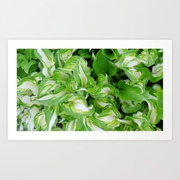 Green and white swirl with hosta plant Art Print
