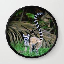 Madagascar's Exotic Ringtail Lemur Wall Clock