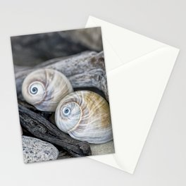 Shark's eye shells and driftwood Stationery Cards