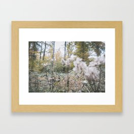 Forest (II) Framed Art Print