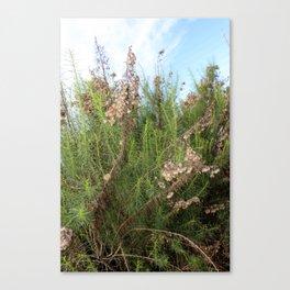 Artemisia Californica Canvas Print