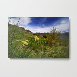 """Narcisus Nevadensis"". Mountain Endemic flower  Metal Print"
