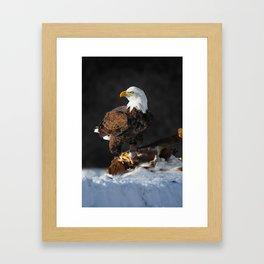 Bald Eagle and Deer Framed Art Print
