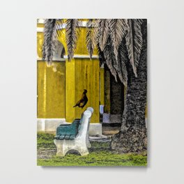 Rooster and Palm Tree, Christiansted, St. Croix, U.S. Virgin Islands Metal Print