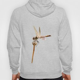 Dragonfly Resting On Seed Head Isolated Hoody