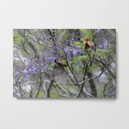 Sunbird eating nectar from a jacaranda Metal Print