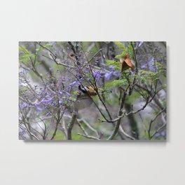 Sunbird eating nectar from a jacaranda Metal Print