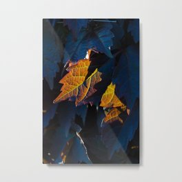 Spot lit autumn vineyard foliage Metal Print