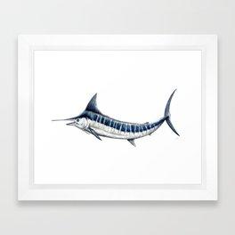 Blue Marlin (Makaira nigricans) Framed Art Print